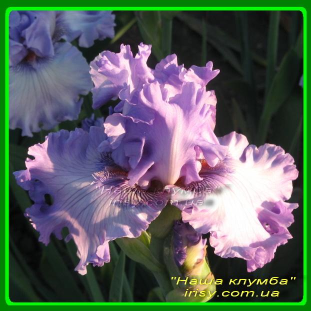 Sweet Geisha. Blyth '2004, 85, EM