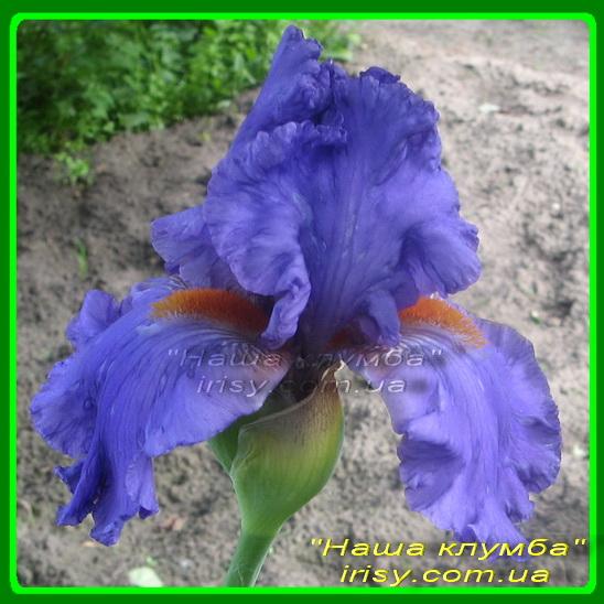 Blue Jean Lady. Lauer'2002, EML, 60