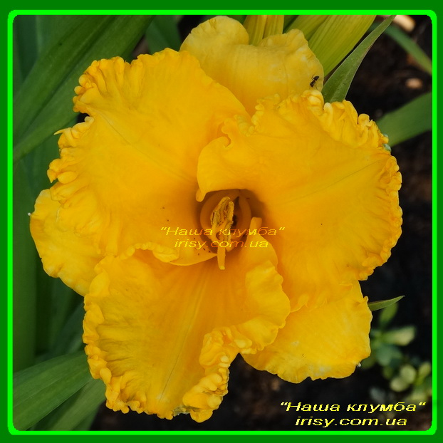 Glory Days. Stamile '1987, Dor, 60, 14.