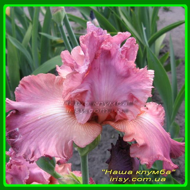 Розовый кружевной
